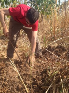 07-harvesting-yams-8898