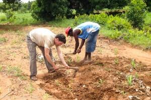 weeding-corn-northern-ghana-IMG_9974